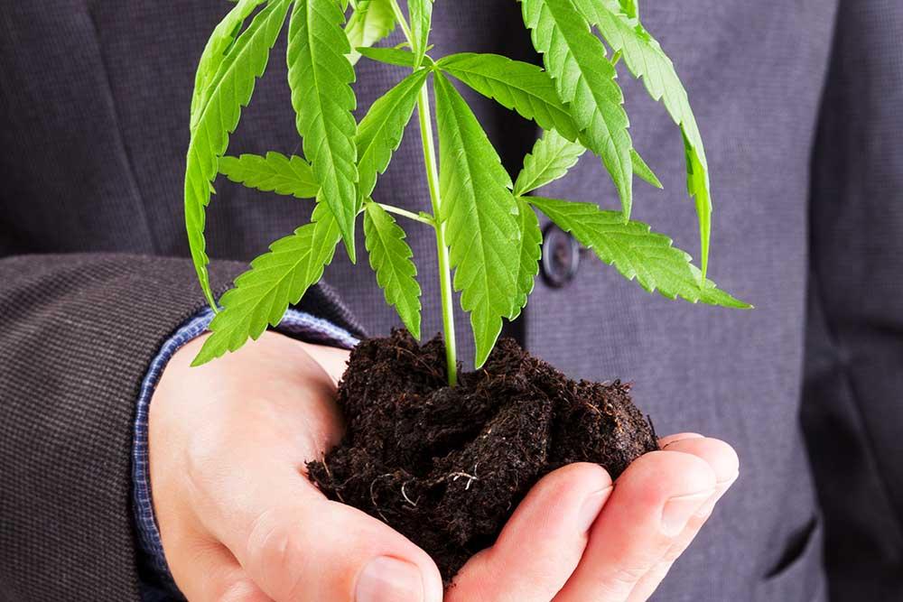 Taking Stock: Are Marijuana Securities Worth The Risk?
